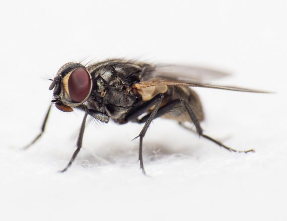 closeup view of house fly